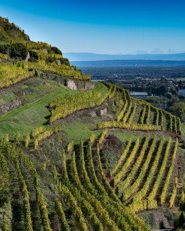 Joyaux du vignoble au sud de l'Alsace