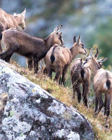 NEU Fotoreise ins Elsass - Einführung in das Tierfoto