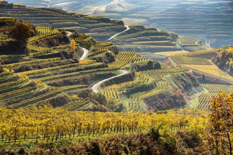 Kaiserstuhl terraced vineyard at fall