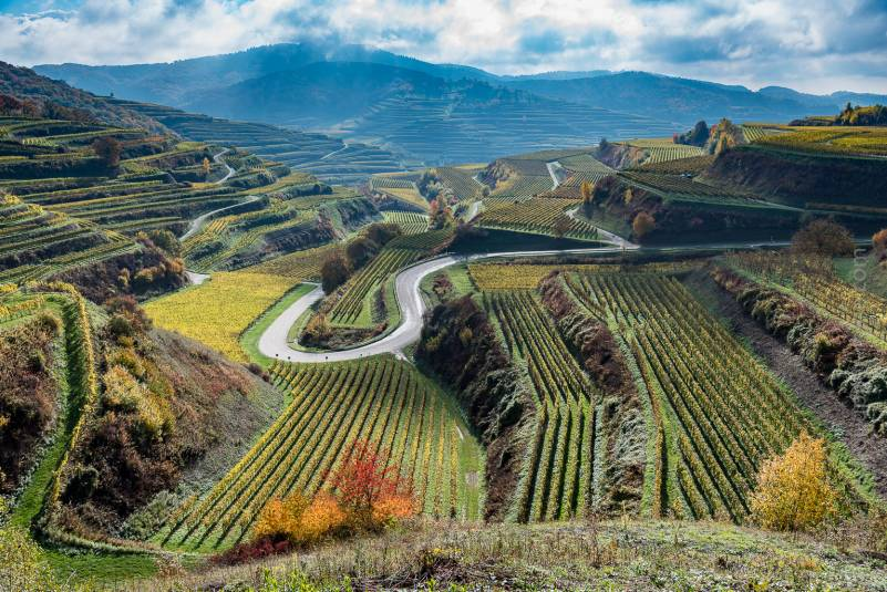 Kaiserstuhl vineyard is an incredible place to view