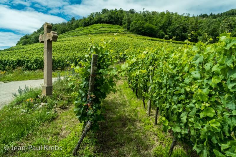 Guebwiller vineyard have 4 Grands Crus