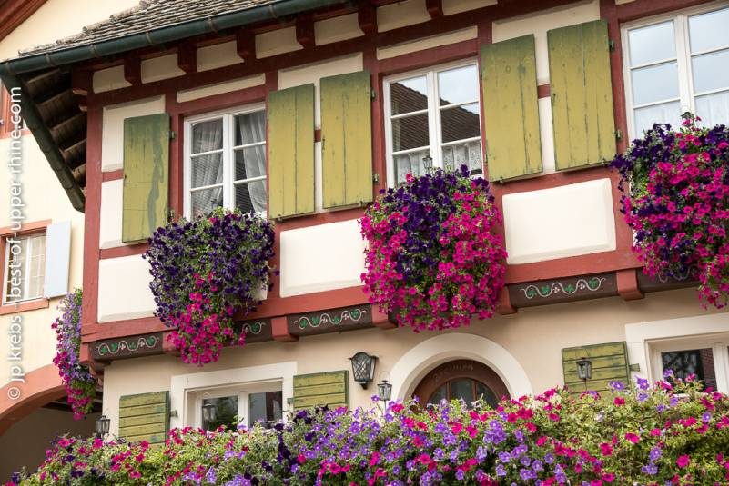 Like in Alsace the houses are in bloom in germany